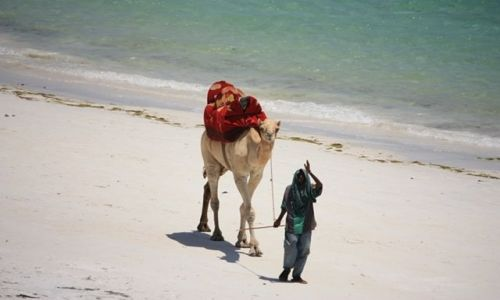 Zdjęcie KENIA / Ocean Indyjski / Mombasa / może przejażdżkę ???