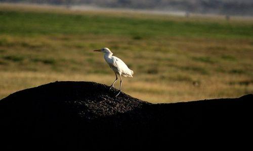 Zdjęcie KENIA / Park Narodowy Tsavo West / Tsavo West / czyściciel słoni...