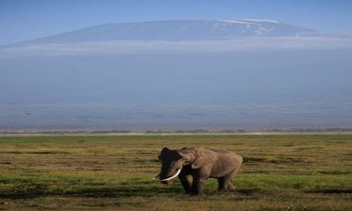 Zdjecie KENIA / Park Narodowy  Amboseli / Amboseli / sam na sam z Kilimadżaro..