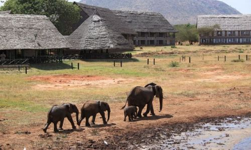 Zdjecie KENIA / Tsavo East / Voi Wildlife Safari Lodge / elephant family 3