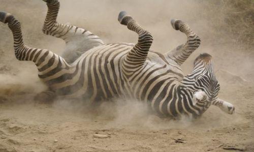 Zdjecie KENIA / - / Lake Nakuru / Koń by się uśmi