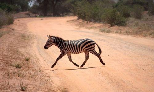 Zdjecie KENIA / Poludniowa Kenia / Tsavo East / nie dotykając ziemi......
