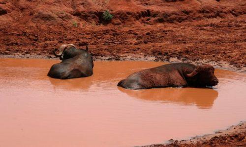Zdjecie KENIA / Afryka / AMBOSELI / pełny relax
