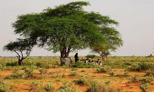 Zdjecie KENIA / Afryka /  AFRYKA / SZKOŁA POD CHMURKĄ