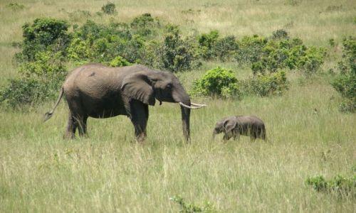 Zdjecie KENIA / - / Masai Mara / Mała wlelka miłość