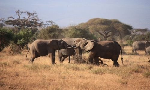 Zdjęcie KENIA / Południowa  Kenia / Mombasa / zabawa