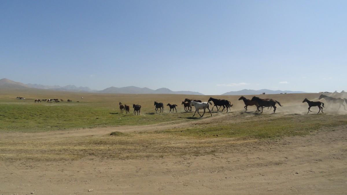 Zdjęcia: Okolice Song Kol, Okolice Song Kol, Kirgistan, KIRGIZJA