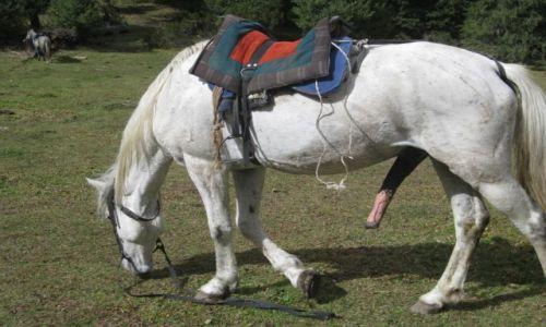 Zdjęcie KIRGIZJA / Kirgizja / Kirgizja / To nie porno Koń zrobił siusiu i skubie trawke