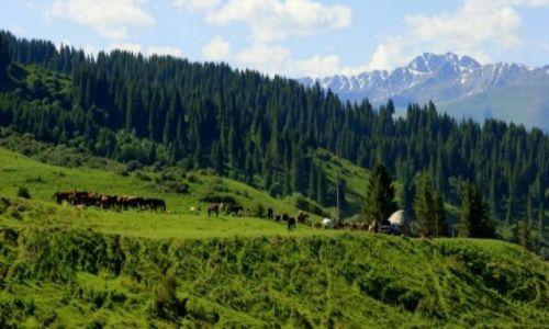 Zdjęcie KIRGIZJA / Kirgizja / Kirgizja / Gospodarstwo