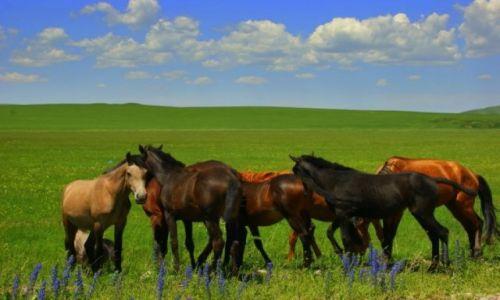 Zdjęcie KIRGIZJA / Kirgizja / Kirgizja / STADO