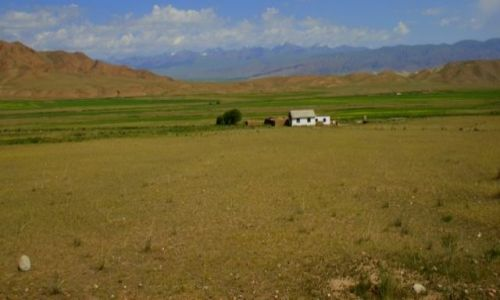 Zdjęcie KIRGIZJA / Okolice Narynia  / Okolice Narynia  / Samotnie