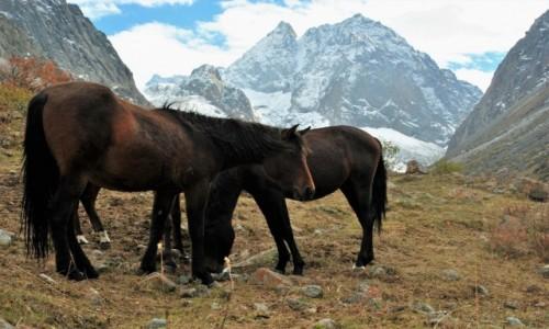 KIRGIZJA / -Tian Shan / Ala-Archa  / Ala-Archa Horses