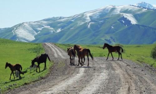 KIRGIZJA / Kirgizja / tuż za Karkarą / Mieszkańcy przypudrowanych gór