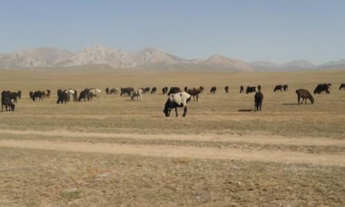 Zdjecie KIRGIZJA / Song Kol / Kirgizja / Kirgistan