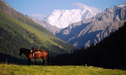 Zdjecie KIRGIZJA / brak / Altyn Arszan / kirgiz wszedł w konia