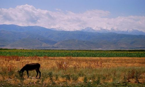 Zdjecie KIRGIZJA / brak / gdzieś między Biszkiekiem, a hm...nie pamiętam. / kirgistan jak ż