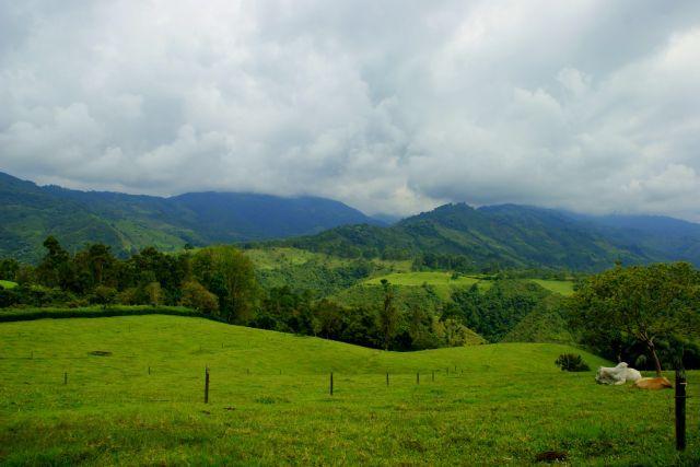 Zdjęcia: Salenta, Salenta, Pastwisko, KOLUMBIA
