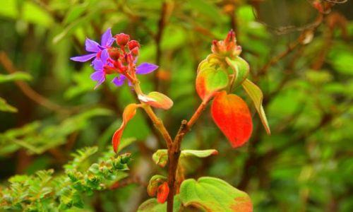 KOLUMBIA / Wulkan  Galeras / Wulkan  Galeras / Kwiaty na  wulkanie