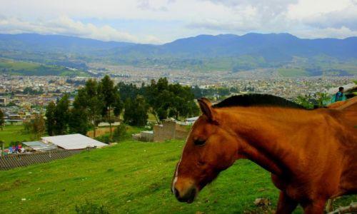 Zdjęcie KOLUMBIA / Pajo / Pajo / Pastwisko  z  widokiem