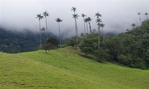 Zdjecie KOLUMBIA / - / Cocora Valley / Palmy