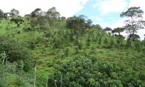 Zdjęcie KOLUMBIA / Quindio / Salento / Kawowa farma
