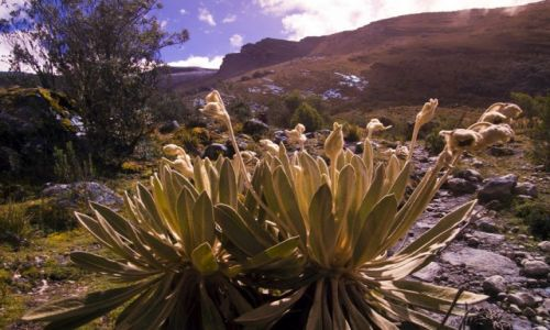 Zdjecie KOLUMBIA / Sierra Nevada del Cocuy / Sierra Nevada del Cocuy / Freilejones