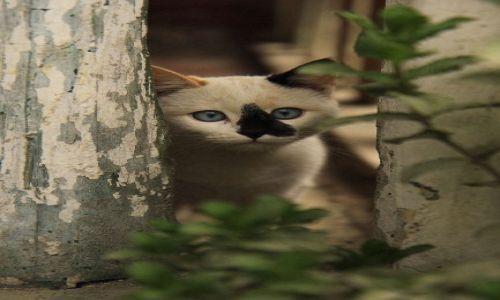 Zdjecie KOLUMBIA / płd-zach Kolumbia / płd-zach Kolumbia / Koty są ciekawskie jak w każdym innym miejscu na świecie..