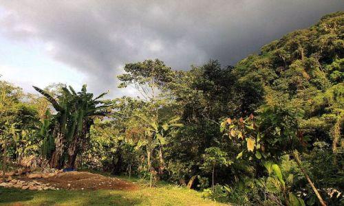 Zdjecie KOLUMBIA / Sierra Nevada / na trasie trekingu / Selva przed burzą...
