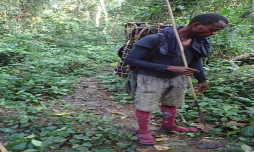 KONGO / - / Gdzieś w dżungli / Przewodnik