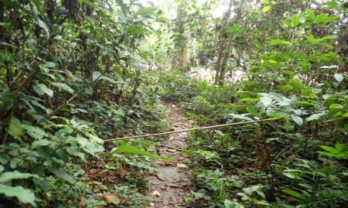 Zdjęcie KONGO / - / Boah / Dżungla