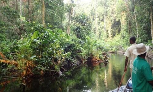 Zdjecie KONGO / - / Likouala River / W drodze do Ouesso