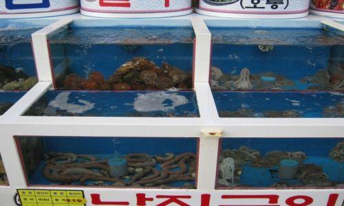Zdjęcie KOREA POŁUDNIOWA / Jeollanam - do / MOKPO / Koreańskie przysmaki - smacznego:)