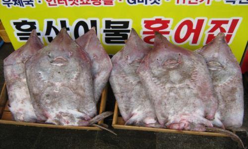 Zdjęcie KOREA POŁUDNIOWA / Jeollanam - do / MOKPO / Smutne uśmiechy...