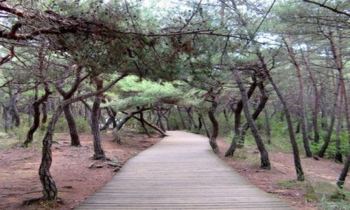 Zdjęcie KOREA POŁUDNIOWA / Gyeongju / Namsan / Szlak turystyczny na górze Namsan