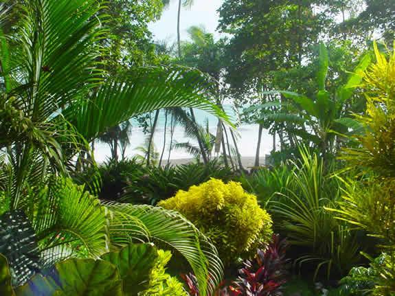 Zdjęcia: Carate, Połwysep Osa, Dżungla przy plaży, KOSTARYKA