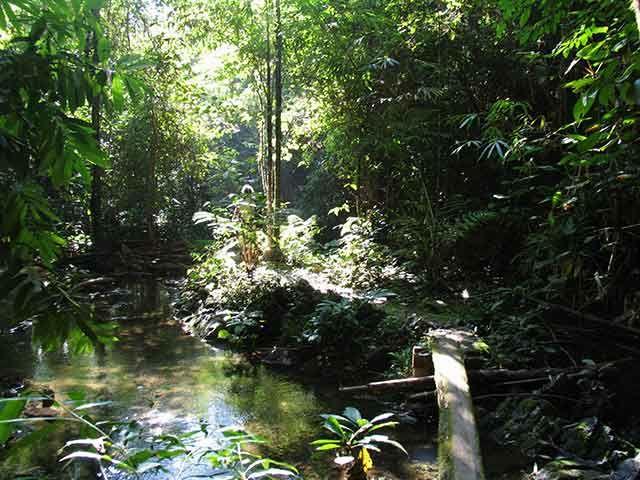 Zdjęcia: Puntarenas, Peninsula de Nicoya, dżungla, KOSTARYKA