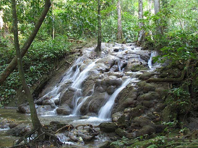 Zdjęcia: Puntarenas, Peninsula de Nicoya , dżungla, KOSTARYKA