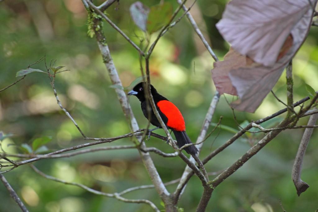 Zdjęcia: La Fortuna, Ecocentro Danaus, Ptaki 5, KOSTARYKA