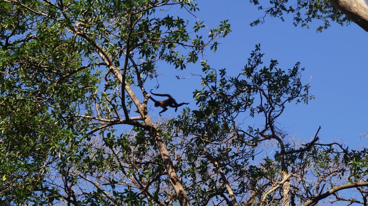 Zdjęcia: Park Narodowy Rincon de la Vieja, Park Narodowy Rincon de la Vieja, Umiem latać, KOSTARYKA