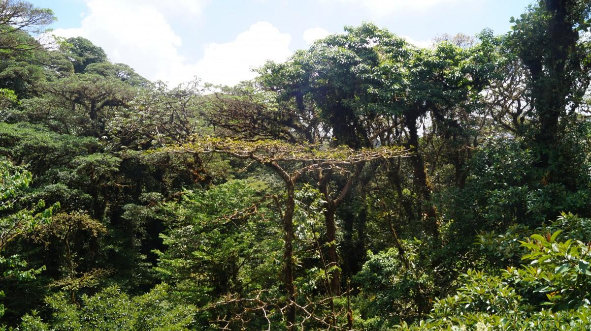 Zdjęcia: Monteverde, Monteverde, Magiczny deszczowy las, KOSTARYKA