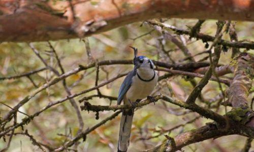KOSTARYKA / - / Park Narodowy Arenal / Ptaki 4
