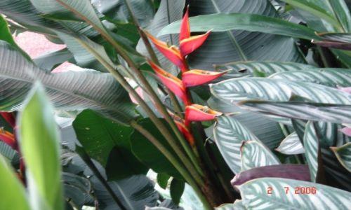 Zdjecie KOSTARYKA / Okolice San Jose / Okolice San Jose / Dumny, czerwony kwiat