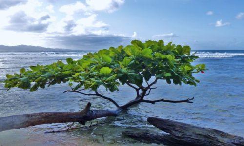 Zdjęcie KOSTARYKA / Morze Karaibskie / Puerto Viejo / Puerto Viejo