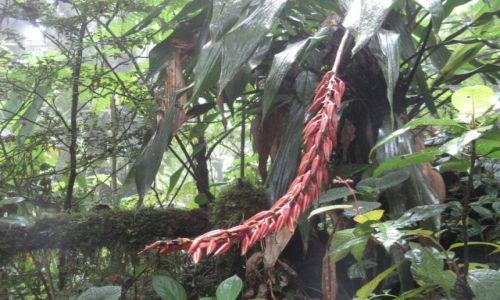 KOSTARYKA / Kostaryka / Monteverde / Las Chmurowy Monteverde