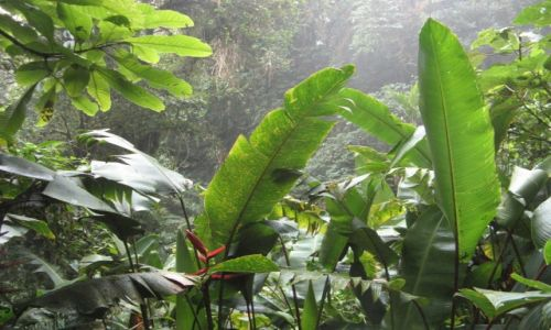 Zdjęcie KOSTARYKA / Kostaryka / Monteverde / Las Chmurowy Monteverde