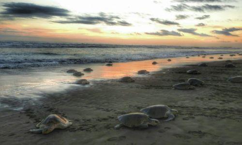 Zdjęcie KOSTARYKA / Guanacaste / Playa Ostional / Zew natury