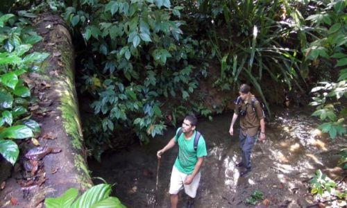 Zdjęcie KOSTARYKA / półwysep Osa / park corcovado / Na leśnym szalku,Daniel i Eric Bochnak