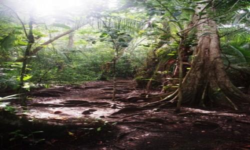 Zdjecie KOSTARYKA / Pavones / Pavones / dżungla