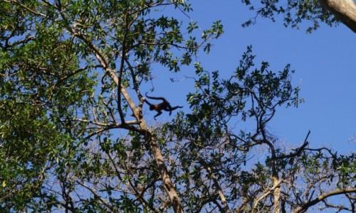 Zdjęcie KOSTARYKA / Park Narodowy Rincon de la Vieja / Park Narodowy Rincon de la Vieja / Umiem latać