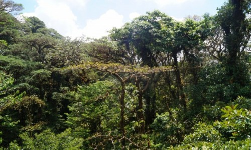 Zdjęcie KOSTARYKA / Monteverde / Monteverde / Magiczny deszczowy las